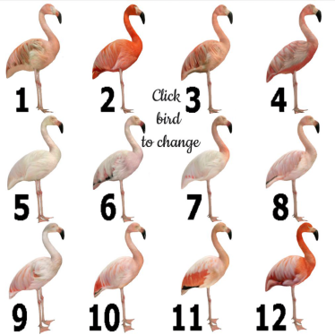 Flamingo Texture selections